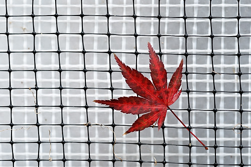 Rotes Blatt
